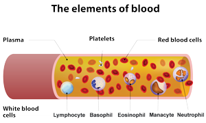 Blood Cell Diagram